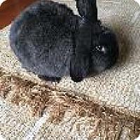 Adopt A Pet :: Sienna - Woburn, MA