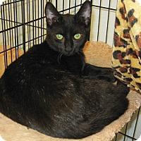 Adopt A Pet :: Coal - Lumberton, NC