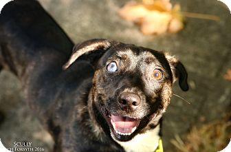 Corgi Mix Dog for adoption in Portland, Oregon - Scully