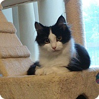 Adopt A Pet :: Malina - Colmar, PA