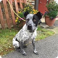 Adopt A Pet :: Millie - Hamilton, GA