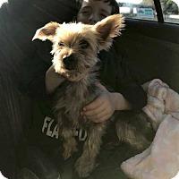Adopt A Pet :: Magic! - New York, NY