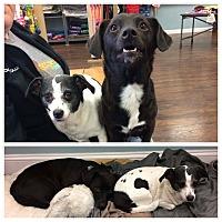Adopt A Pet :: Ellen & Portia - Colmar, PA