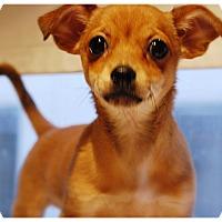 Adopt A Pet :: AUDREY - Glendale, CA