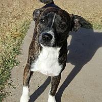 Adopt A Pet :: Bosley - Tucson, AZ