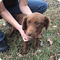 Adopt A Pet :: Alice - Cumming, GA