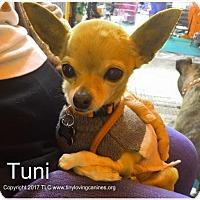 Adopt A Pet :: Tuni - Simi Valley, CA