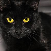 Adopt A Pet :: Sara Lee - Alexandria, VA