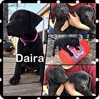 Adopt A Pet :: Daira - Hearne, TX