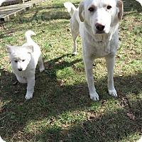 Adopt A Pet :: Nazli & Yaren - Washington, DC