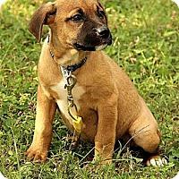 Adopt A Pet :: Maegan - Brattleboro, VT