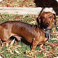 Adopt A Pet :: Pilgrim - San Jose, CA
