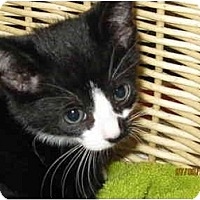Adopt A Pet :: Cheetah_Dustin - Catasauqua, PA