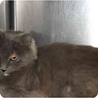 Adopt A Pet :: Marmie - Greenville, SC