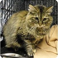 Adopt A Pet :: M.J. - Mission, BC