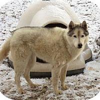 Adopt A Pet :: Cheyenne - Santa Fe, NM