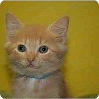 Adopt A Pet :: SHERMAN - SILVER SPRING, MD