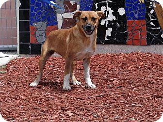 Terrier (Unknown Type, Medium) Mix Dog for adoption in Palmetto Bay, Florida - Olivia Benson