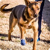 Adopt A Pet :: Starsky - Pinehurst, NC