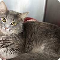 Adopt A Pet :: Smokey 3 - St Louis, MO