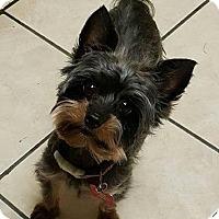 Adopt A Pet :: Bailey ADOPTION PENDING - East Hartford, CT