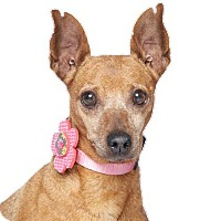 Adopt A Pet :: Lady Min -