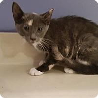 Adopt A Pet :: Vidia - Elyria, OH