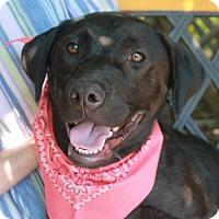 Adopt A Pet :: Lila - Garfield Heights, OH