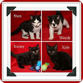 Domestic Shorthair Kitten for adoption in Marietta, Ohio - South Park Kittens