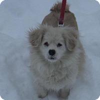 Adopt A Pet :: Hardee - Ceres, VA