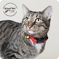 Adopt A Pet :: Lorel - Apache Junction, AZ