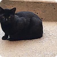 Adopt A Pet :: Herbie - Wilton, NY