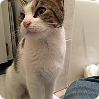Adopt A Pet :: Pretty - Brooklyn, NY