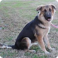 Adopt A Pet :: LOREILI - Plano, TX