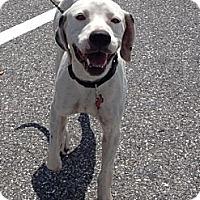 Adopt A Pet :: Cavan Darby - Tampa, FL