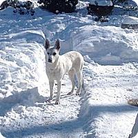 Adopt A Pet :: Gypsy - Laingsburg, MI