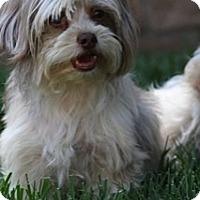 Adopt A Pet :: MATTIE - Mission Viejo, CA