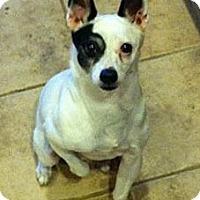 Adopt A Pet :: Spud Boy - Glen Burnie, MD