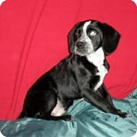 Adopt A Pet :: Kramer - East Sparta, OH