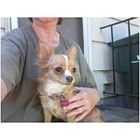 Adopt A Pet :: Ruby - Everett, WA