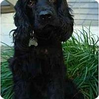 Adopt A Pet :: Drake - Sugarland, TX