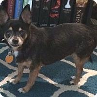 Adopt A Pet :: J Lo - Orlando, FL