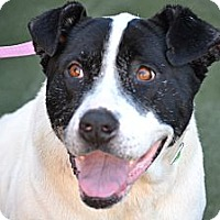 Adopt A Pet :: Sidney- I am an EASY DOG! - Redondo Beach, CA