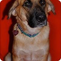 Adopt A Pet :: Zuma - Austin, TX