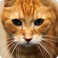 Adopt A Pet :: Monkey - Gilbert, AZ