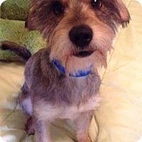 Adopt A Pet :: ARCHIE - Higley, AZ