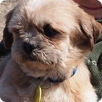 Adopt A Pet :: Caleb - Prole, IA
