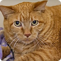 Adopt A Pet :: Glen - Lincoln, NE