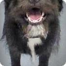 Adopt A Pet :: Cari-In Shelter