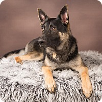 Adopt A Pet :: Timber - Salem, OR